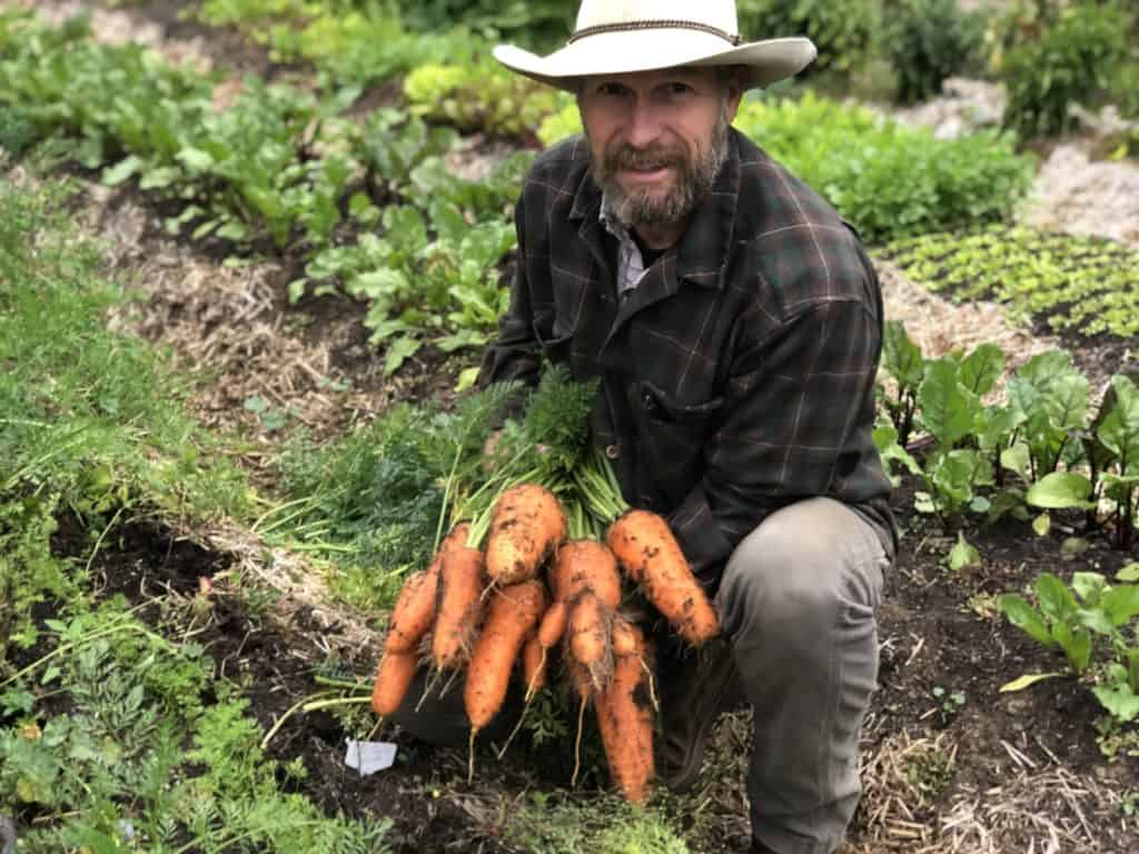 Man holding carrots just pulled from the garden.
