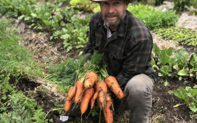 How to Plant Carrot Seeds (for Maximum Germination)