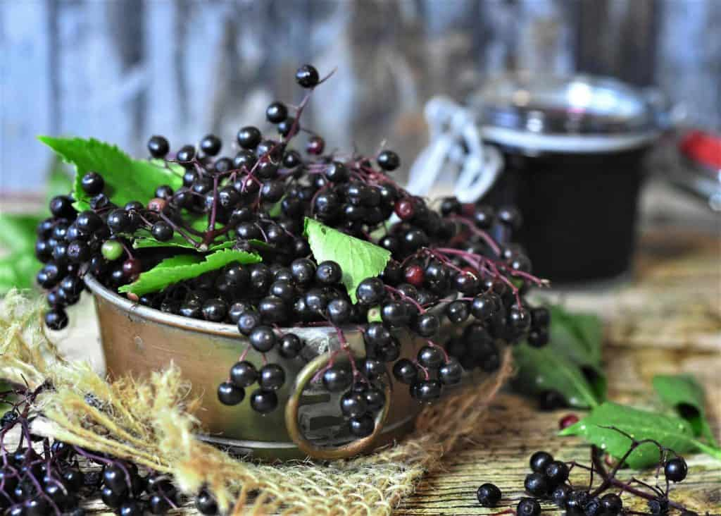 Fresh picked elderberries in a basket with a jar of elderberry syrup in the background