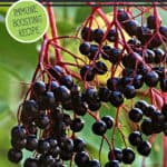 """Elderberries growing on a tree with text overlay, """"Simple Homemade Elderberry Syrup: Immune Boosting Recipe""""."""