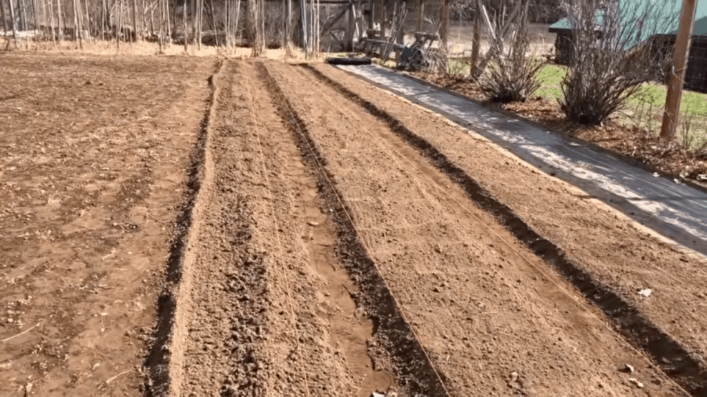 Rows of deep soil in a garden.