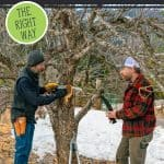 "Two men pruning a fruit tree. Text overlay says, ""How to Prune Fruit Trees"""