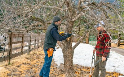 Pruning Fruit Trees the Right Way (For the Best Harvest)