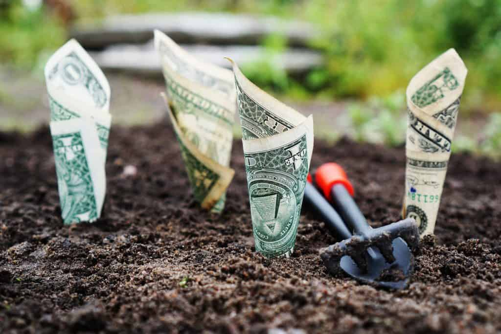 Dollar bills rolled up and planted in soil.