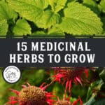 "Two Images, BeeBalm and Lemon Balm with text overlay, ""15 Medicinal Herbs to Grow""."