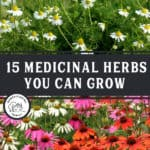 "Two images of chamomile and echinacea flowers with text overlay, ""15 Medicinal Herbs You Can Grow""."