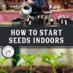 "Two images, a man watering small pots with seedlings, the other a close up shot of seedlings. Text overlay says, ""How to start seeds indoors""."