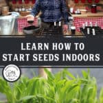 "Two images, top image is a man standing in front of seed starting supplies, bottom image is of seedlings in small pots. Text overlay says, ""Learn how to start seeds indoors"""