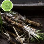"Picture of horseradish roots with text overlay, ""Medicinal Herbs and Their Uses""."