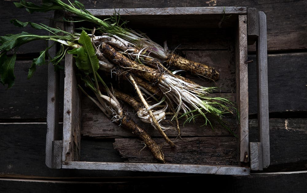 Wooden box with fresh horseradish root inside.