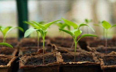 Learn How To Start Seeds Indoors (What, When, Why & How)