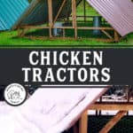"Two images of an a frame chicken tractor. Text overlay says, ""Chicken Tractors: What you need to know""."