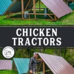 "Two images of an a-frame chicken tractor. Text overlay says, ""Chicken Tractors: What to Know""."