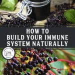 """A picture of elderberry syrup in a jar and a picture of elderberries on a tree. Text overlay says, """"How to Build Your Immune System Naturally""""."""