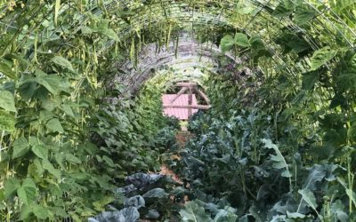 How to Build a DIY Hoop House or Bean Tunnel