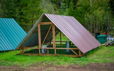 Chicken Tractor Basics & What to Consider When Building One