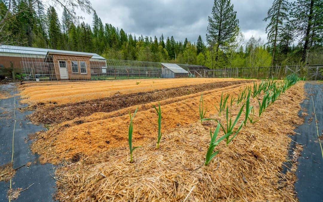 How to Buy a Homestead – What To Know Before You Buy