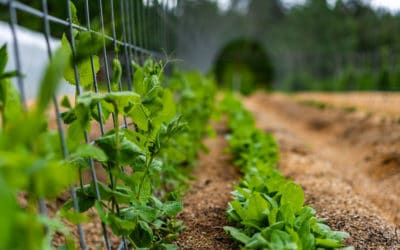 How to Keep Weeds Out of the Garden – Managing Weeds