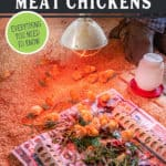 """Image of baby chicks in a brood coop with text overlay, """"Learn How to Raise Your Own Meat Chickens""""."""