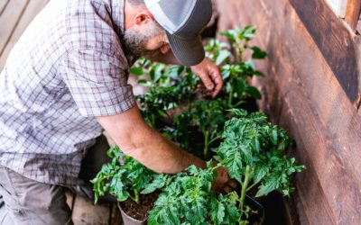 Garden Planning for Serious Food Production