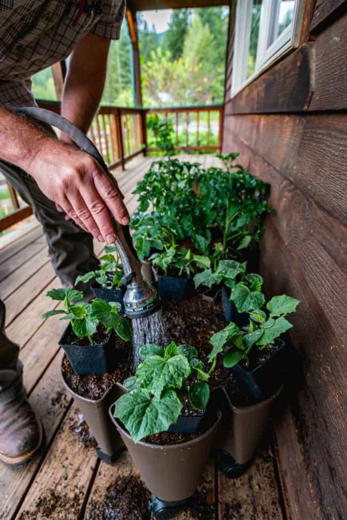 A man watering plants in a vertical garden.