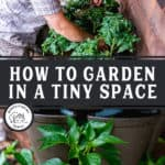 "Pinterest pin with two images of a man planting a vertical garden in a Greenstalk Garden Tower. Text overlay says, ""How to Garden in a Tiny Space""."