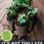 "Pinterest pin with an image of a vertical garden growing veggie plants. Text overlay says, ""It's not too late for a Garden This Year""."