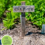"""Pinterest pin with an image of a long row of carrot tops. Text overlay says, """"20 Vegetables to Plant in Late Summer""""."""