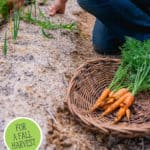 """Pinterest pin with an image of a hand pulling a carrot out of the dirt. Text overlay says, """"20 Vegetables You Can Plant in August""""."""