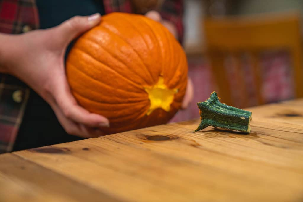 Two hands holding a pumpkin knocking the stem off on the edge of the counter.