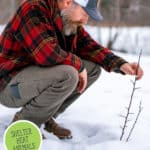 Pinterest pin with an image of a man tending to a small tree sticking up out of the snow.