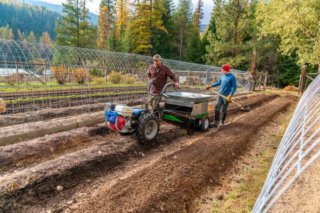 A man and his son spreading compost on a garden row using a BCS tractor.