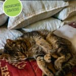 Pinterest pin on stocking your barn for winter with a photo of a cat laying on bags of feed.