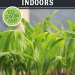 Pinterest pin with images of seedlings for a post on when to start seeds indoors.