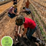 Pinterest pin for early spring garden tips with an image of a family planting seeds in the garden.