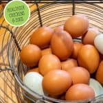 Pinterest pin on how to ferment chicken feed with an image of eggs in a basket.