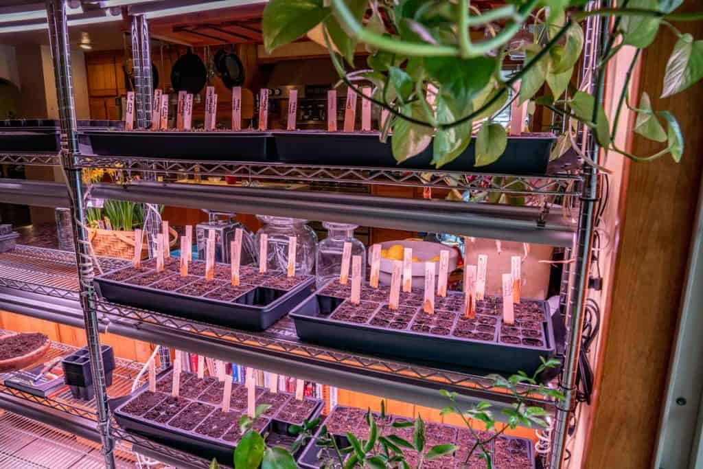 A large kitchen rack filled with seed starts and grow lights.