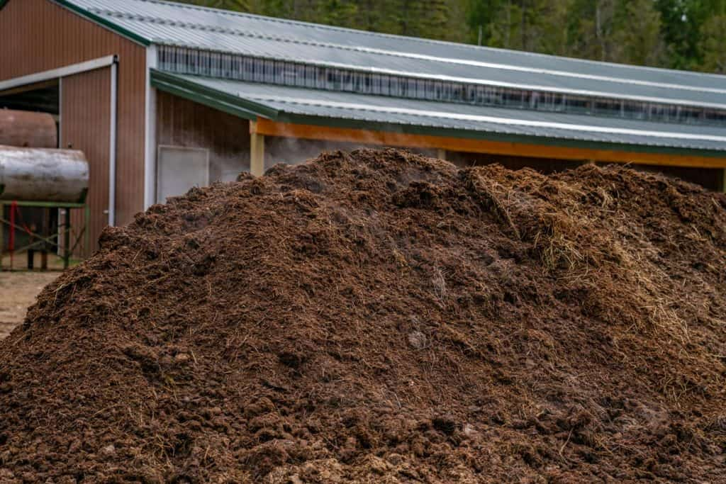 A large pile of steaming compost.