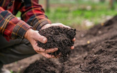 Home Composting (Troubleshooting & FAQs)