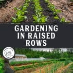 Pinterest pins for building raised garden bed rows with images of a garden and raised rows.
