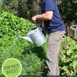 Pinterest pin for the best garden watering practices. Image of a man watering the garden.