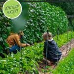 Pinterest pin for the best garden watering practices. Image of a large green garden.