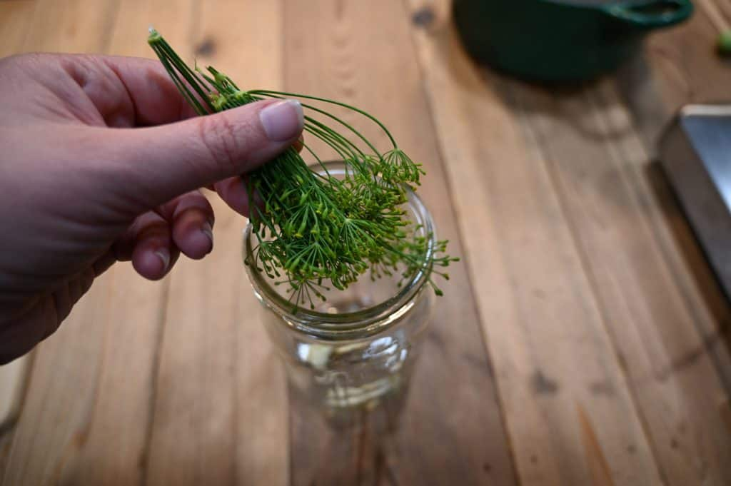 Dill sprig being put into a mason jar for refrigerator pickles.