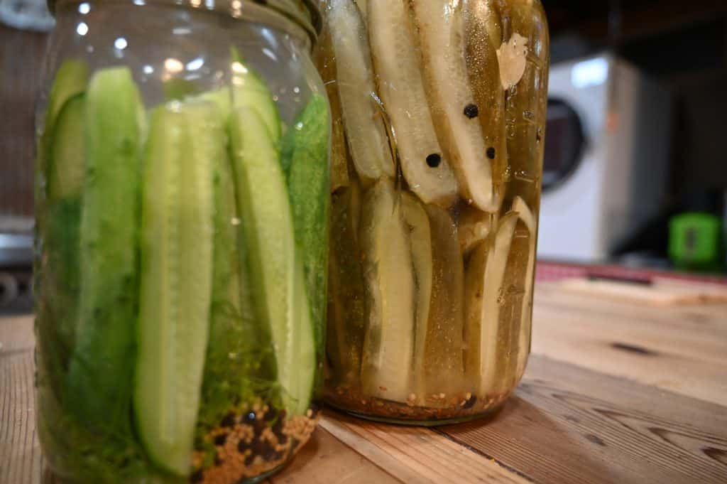 A half gallon jar of finished refrigerator pickles and a quart jar of just made pickles.