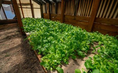How to Grow Greens Year Round
